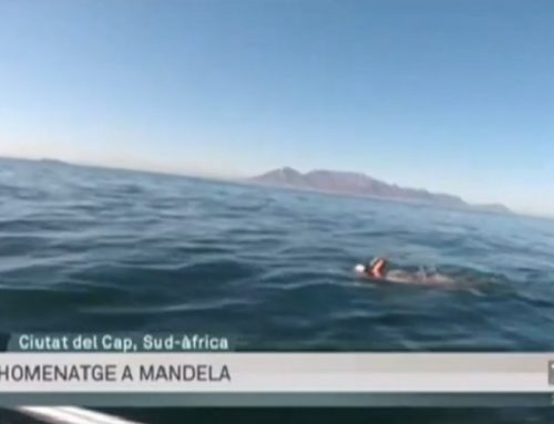 """Robben Island Swim on TV"""